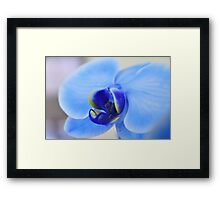 Blue Orchid, As Is Framed Print