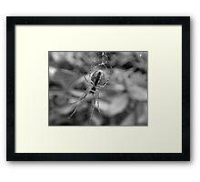 ~ Spider ~ Framed Print