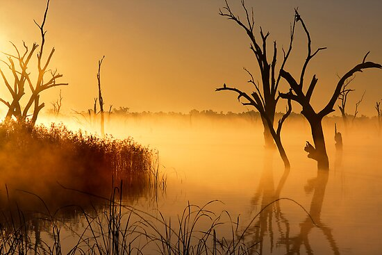 Golden Morning - Lake Mulwala by Hans Kawitzki