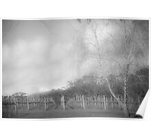 Winter Vineyard 2 in Mono Poster