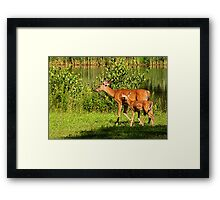 Following Closely Framed Print