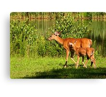 Following Closely Canvas Print