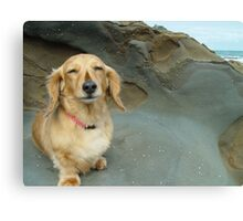 Seaside Dachshund Canvas Print