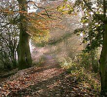 Route 65 - Skelton York by Merice Ewart Marshall - LFA