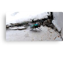 Decay In Macro Canvas Print