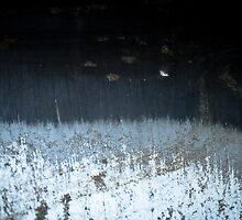 Winter's Waning Moon by Susana Weber