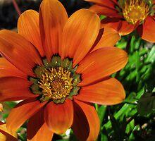 Duet in Orange by LynnL