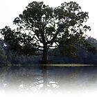 Majestic Oak by rasnidreamer