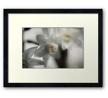 Paperwhites Framed Print
