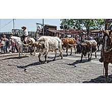 The Cattle Drive Photographic Print