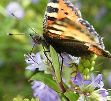 Butterfly upon a budlhia bush by Joyce Knorz