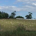 Count The Sheep! by Tracy Faught