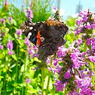 Butterfly days by MarianBendeth
