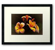 PLUMERIA (common name Frangipani) Framed Print