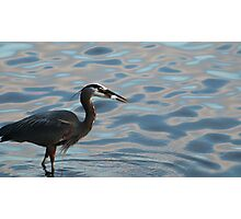 Great Blue Heron Fishing in the Ocean Photographic Print