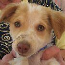 Puppy Portrait by marens