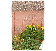 Flower Sidewalk Poster