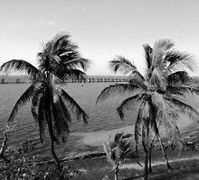 Bahia Honda Palms by KWKelly