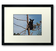 Just Hanging Out ~ Black Bear Cub ~ Baby Bear Framed Print