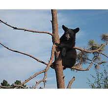 Just Hanging Out ~ Black Bear Cub ~ Baby Bear Photographic Print