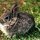 Baby Cottontail by Larry Trupp
