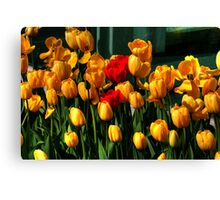 MOTHERS DAY SPECIAL Canvas Print