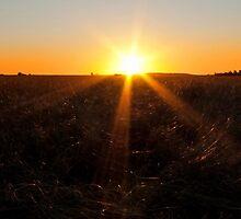 Oakey Sunset by Beth  Wode