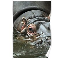 Lady of the Lake - Hippopotamus Poster
