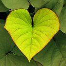 Heart by jstoeber