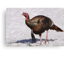 Wild Turkey in the Snow Canvas Print