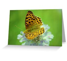 High brown fritillary butterfly Greeting Card