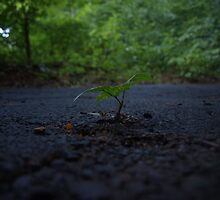 A small weed growing through cement  by NicholasB