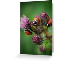 3ree Times A Ladybird Greeting Card
