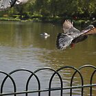 london's birds by kurtmansfield