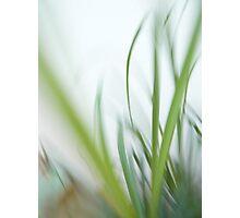 Mild breeze Photographic Print