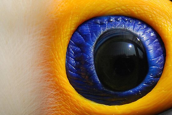 Eye Of The Toucan. by Robert Taylor
