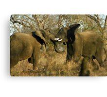 Elephant interaction Canvas Print