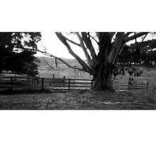 Old gum tree 2 - Dykes Bridge  Photographic Print