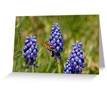Wild Grape Hyacinths and Bee Greeting Card