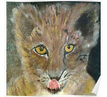 Yellow Eyed Cat Poster