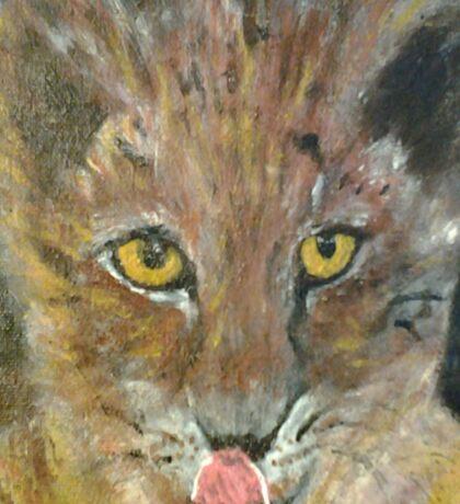 Yellow Eyed Cat Sticker
