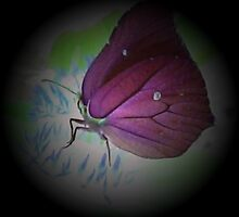 Inverted Colours Of A Butterfly  by Michelle Scott