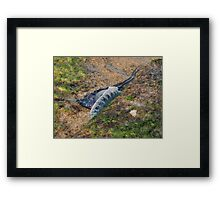 Resting on the Rocks - Portuguese Man-o-war Framed Print