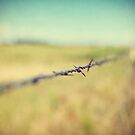 Barbed II by ameliakayphotog