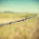 Barbed II by ameliakayphotog