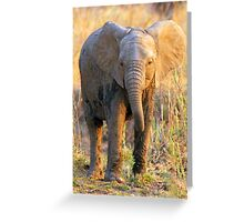 South Luangwa Baby Elephant Greeting Card