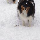 Snow Dogs by Lollipop