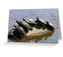 Five Turtles on a Rock in Lost Lagoon Greeting Card
