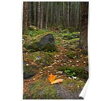 Rainier Forest Autumn Poster