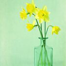 Dreamy Daffodils by Colleen Farrell